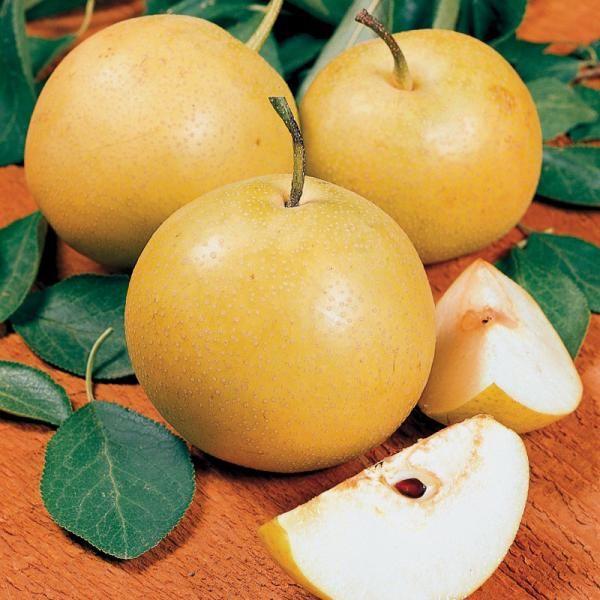 California grown asian pear