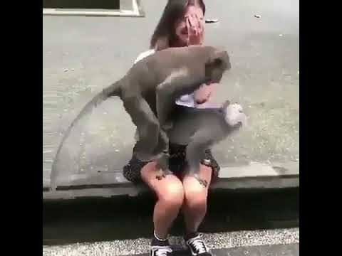 Monkey sex with girl