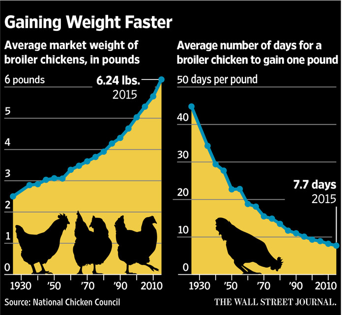 Human breast growth due to chicken