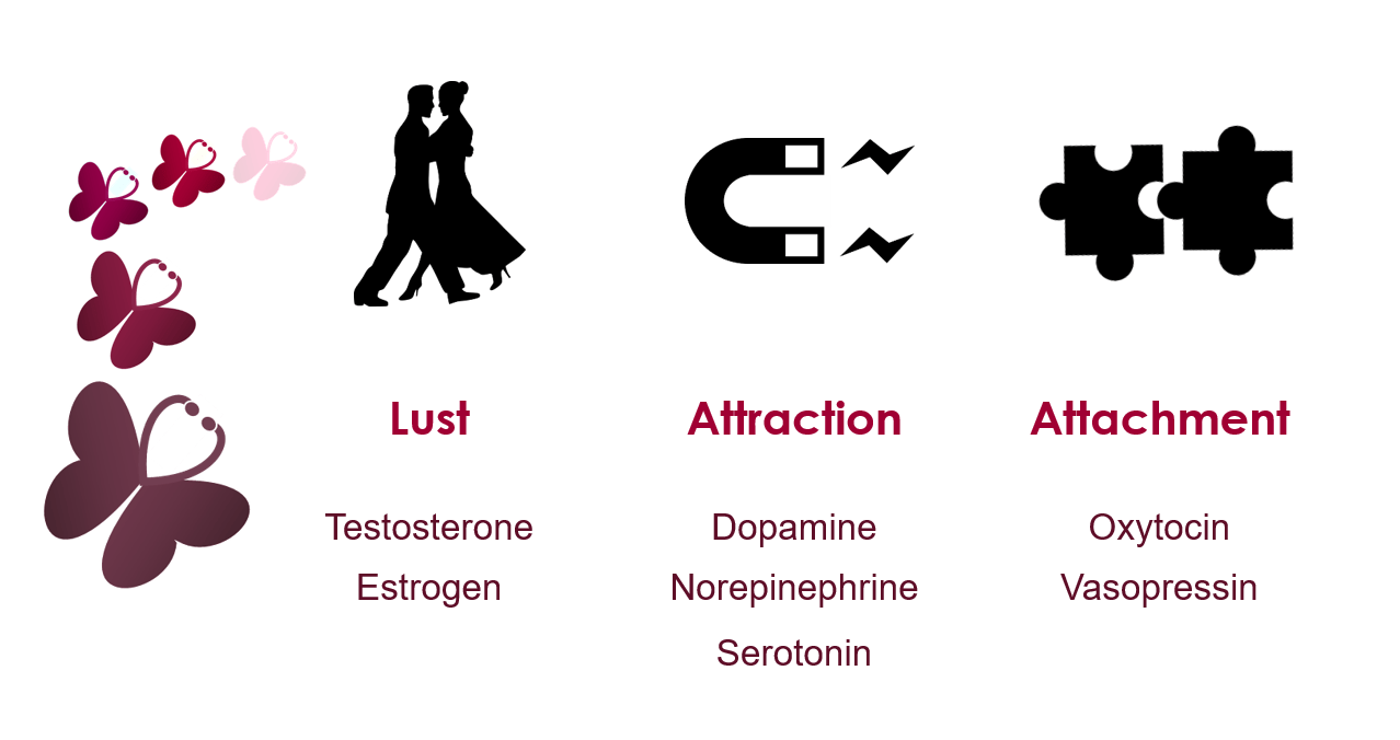 Combined sex hormones meaning