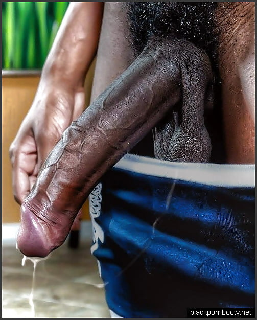 Black erected penis pictures