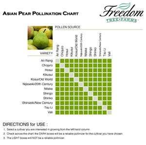 Asian pear apple pollinator