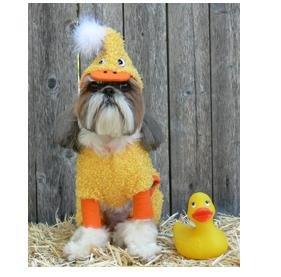 Duck don xxx images