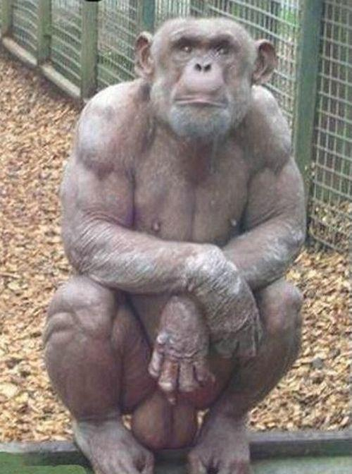 The monkey xxx photo